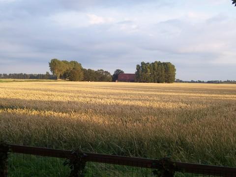 Foto 3: Vakantiehuis Knokkertweg 1 Cadzand Zeeland